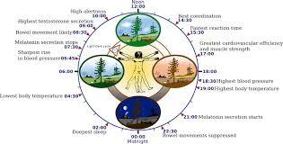 ritmi circadiani