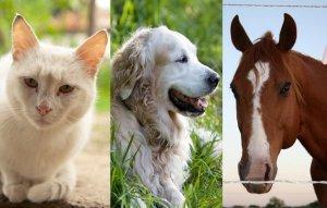 _images_Foto_Articoli_medicina-alternativa_naturopatia_altre_medicine_dolci_pranoterapia-gatto-cane-cavallo